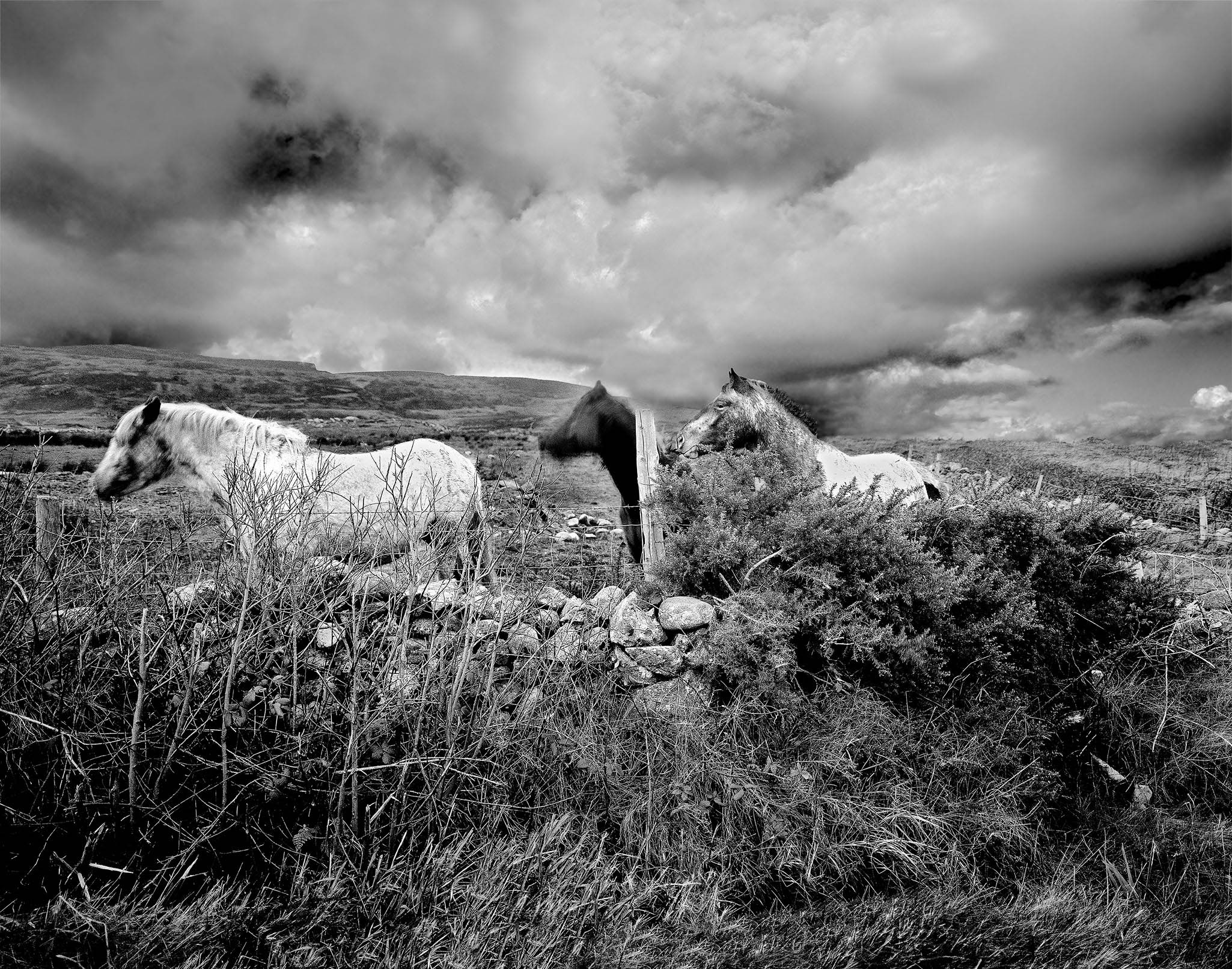 Ponies Photo Inishowen County Donegal