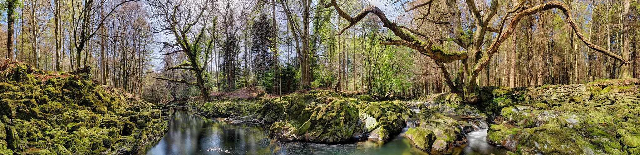 The Shimna River Tollymore Forest