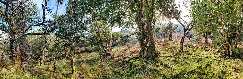 Tomies Wood OSullivans Cascade Kerry
