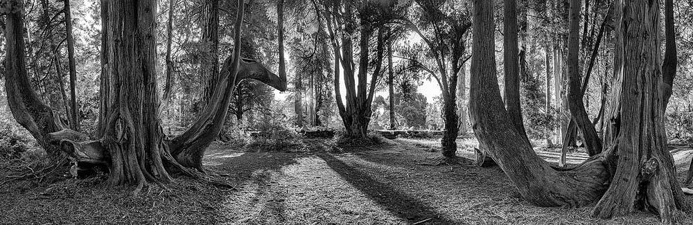 Woodstock Gardens Inistioge County Kilkenny