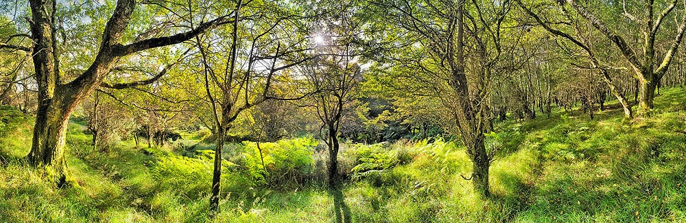 Wicklow Forest Lough Dan