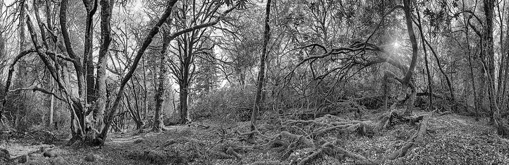 Cascade Wood County Cork