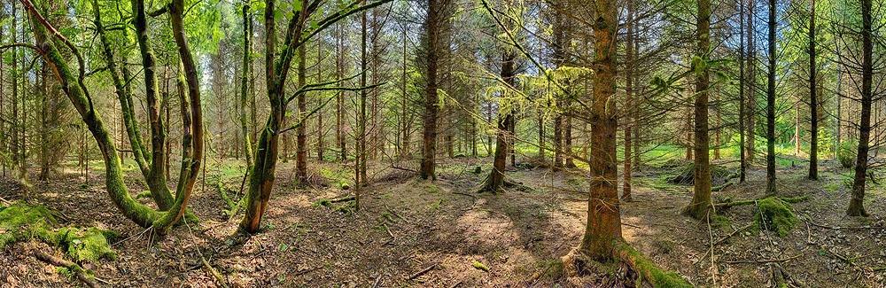 Donadea Forest Park Sunlit Trees