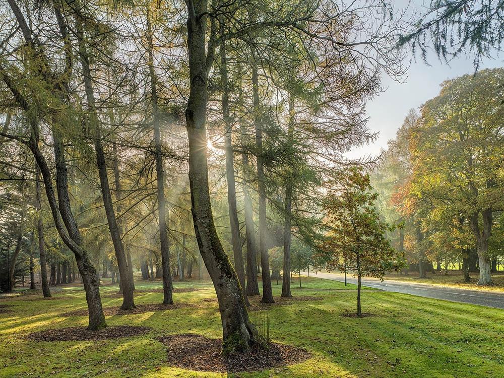 forest photo sunlight belgard castle
