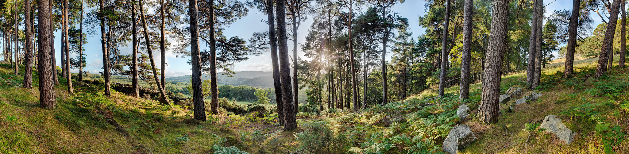 Forest Photo Lough Dan Wicklow