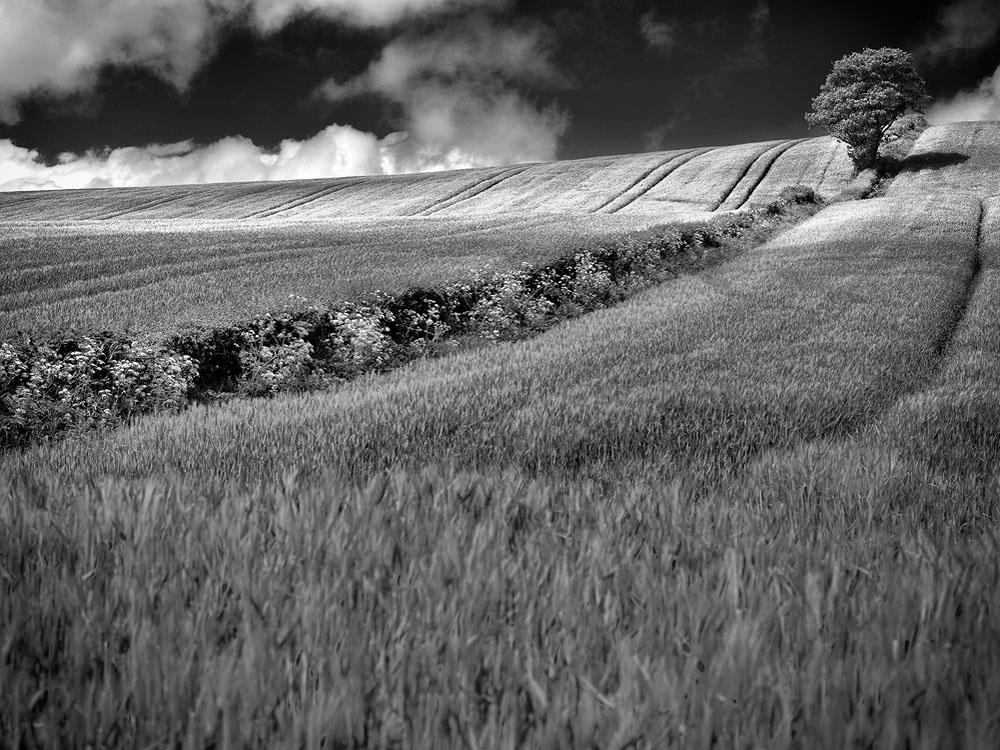 Drumlin Strangford Lough
