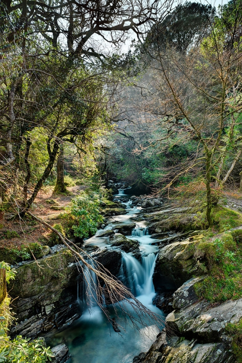 Killarney National Park waterfall forest photo