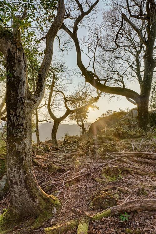 Killarney National Park dead wood photo