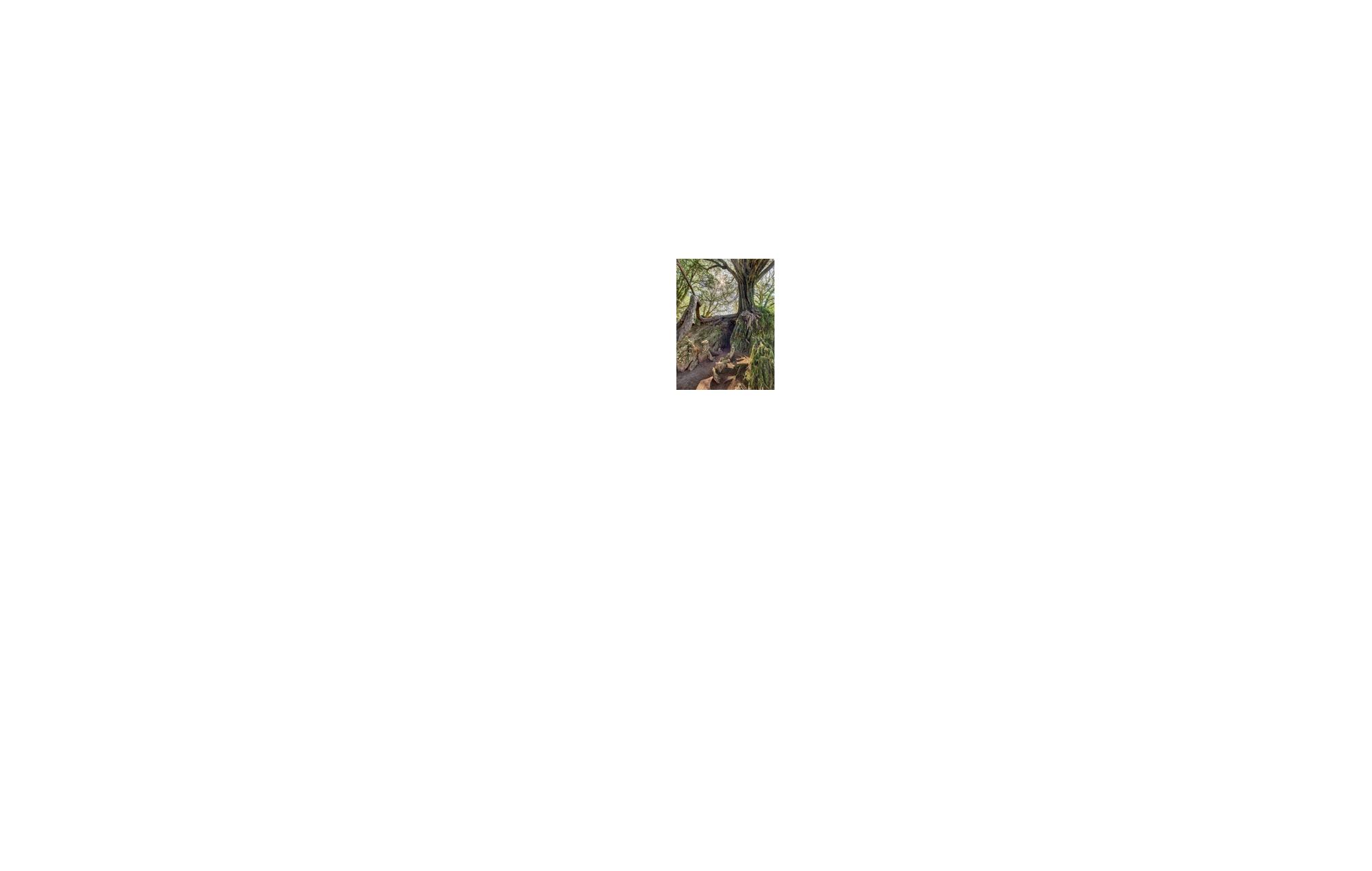 _efa-178-witches-kitchen-blarney-castle-cork-yew-trees-copy - Enda ...