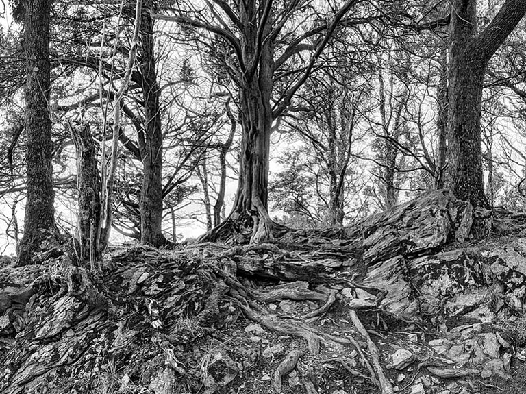 Trees of Ross Island fine art landscape photo