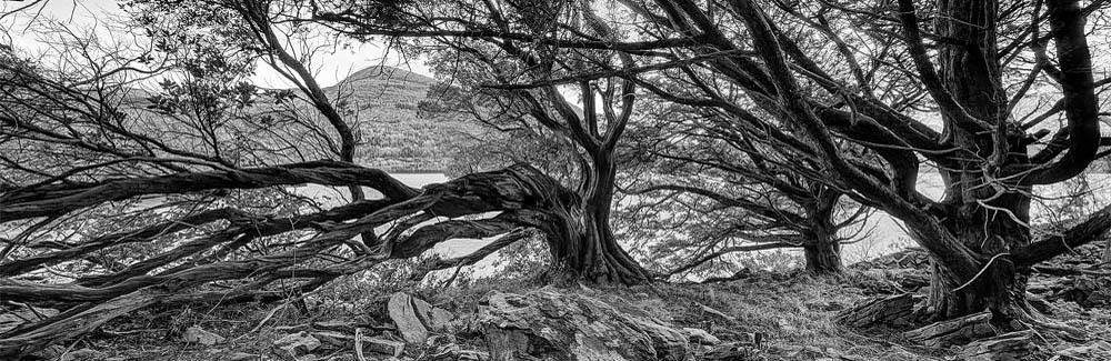 kerry Killarney National Park Black White Forest Photo