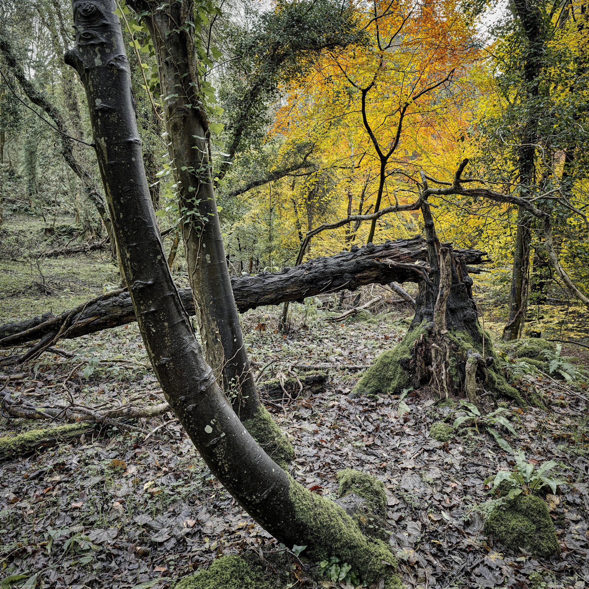 autumn leaves autumn forest photo